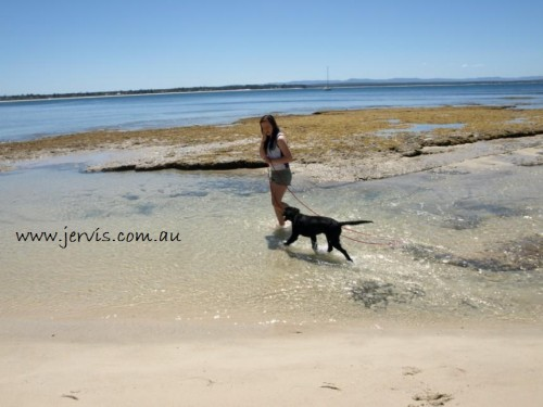 Hyams Beach Pet Friendly Holidays