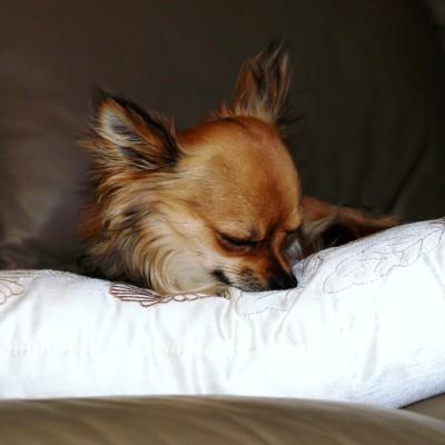 Pet Friendly Holiday Accommodation South Coast NSW